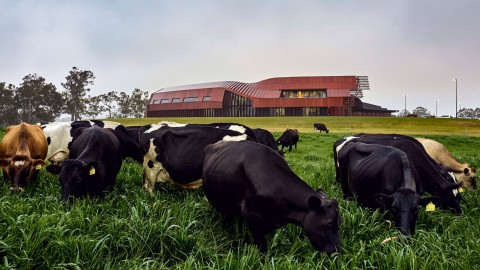 "Bosske Architecture designs red ""super shed"" for Australian dairy farm 