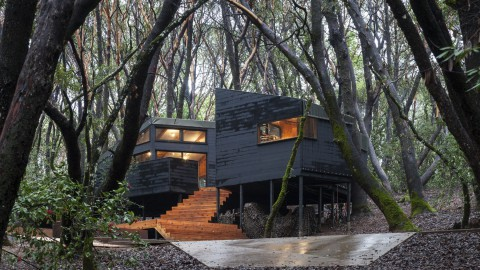 Forest House 森林之家