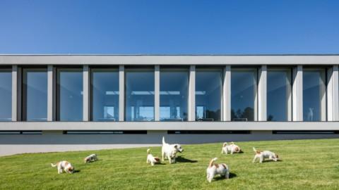 Raulino Silva Arquitecto designs a hotel for cats and dogs in Portugal|Raulino Silva Arquitecto在葡萄牙設計了一家貓狗酒店