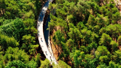 Raised circular cycling path gives 360-degree views of Belgian forest 凸起的圓形自行車道可欣賞比利時森林的360度全景